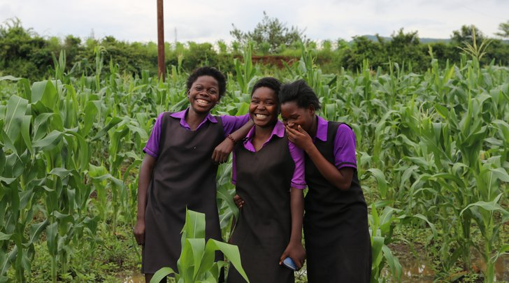3 girls in matching black and purple school uniforms laughing in a corn field in Zambia